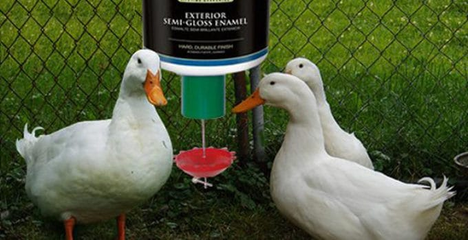 best-duck-waterer-reviews